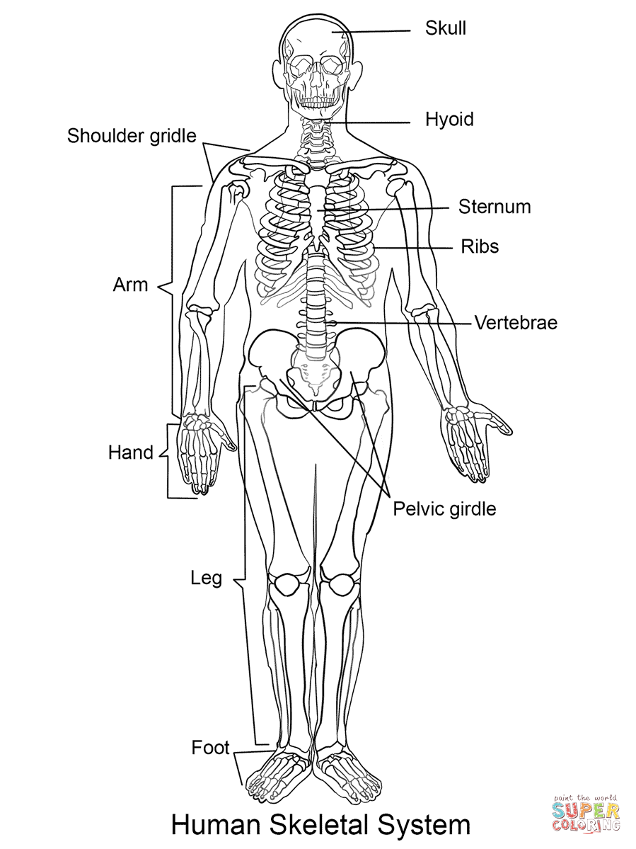 Desenho De Esqueleto Humano Para Colorir