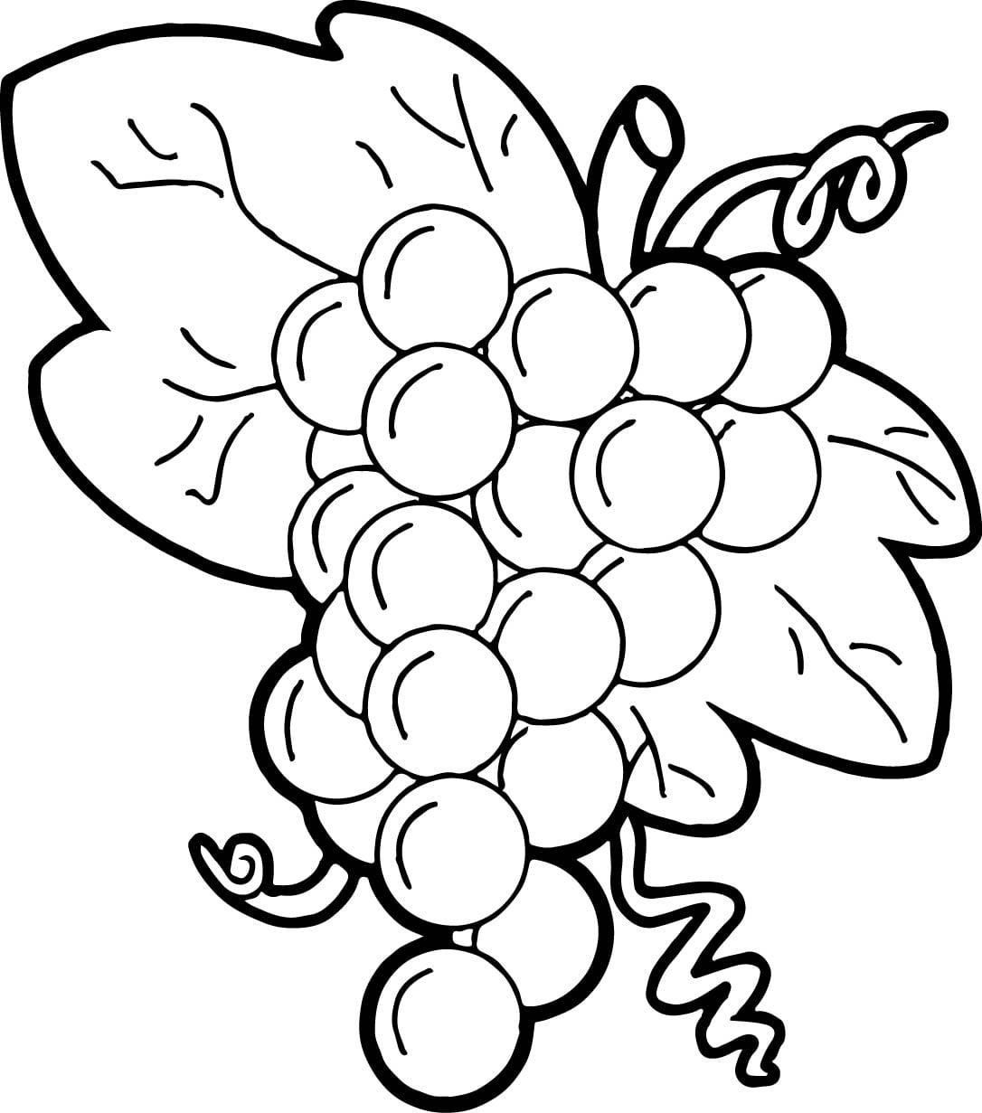 Imagens De Uva Para Colorir Sketch Coloring Page