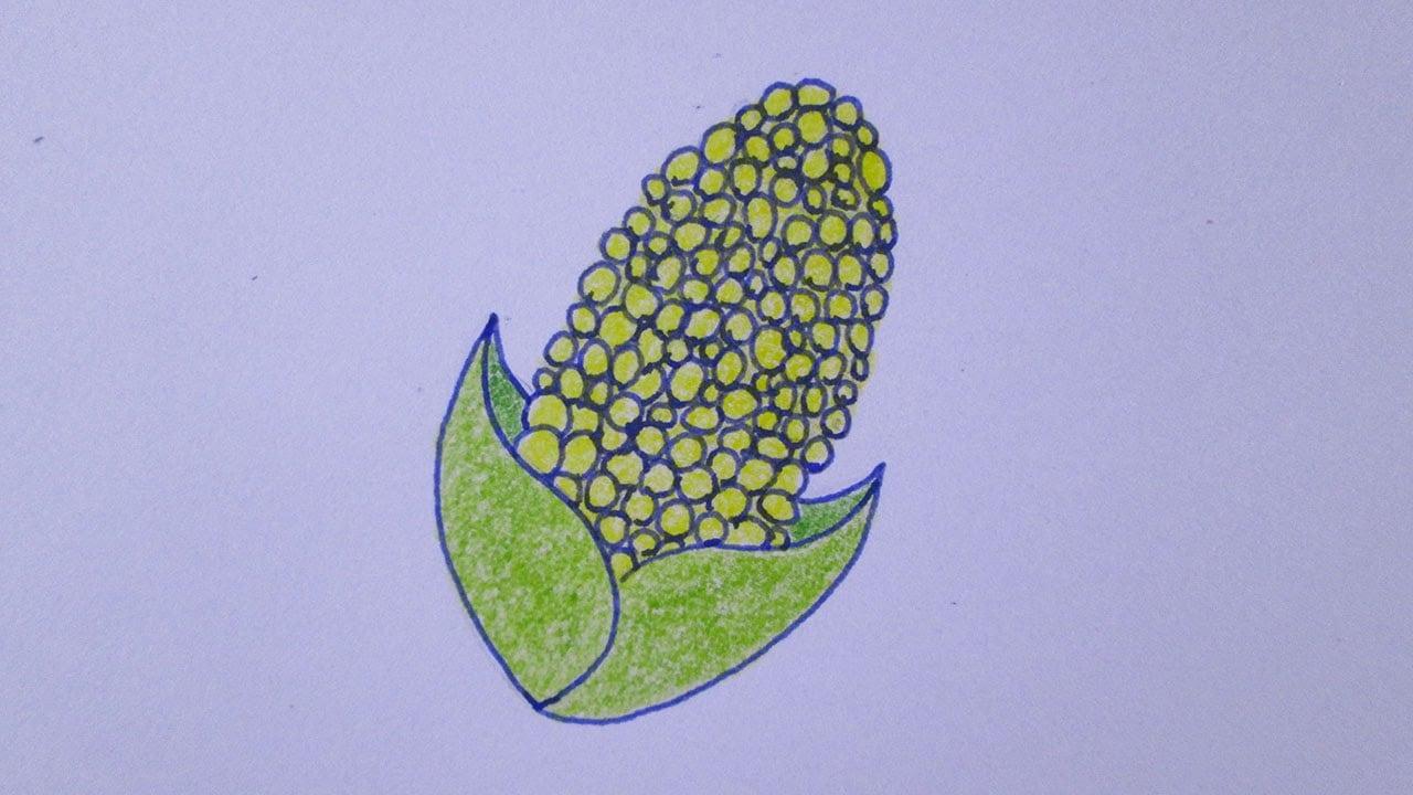 Como Desenhar Uma Espiga De Milho