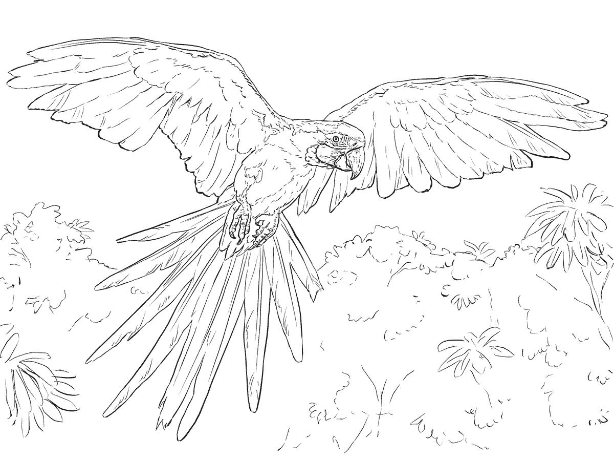 Desenho De Arara Azul Voando Para Colorir