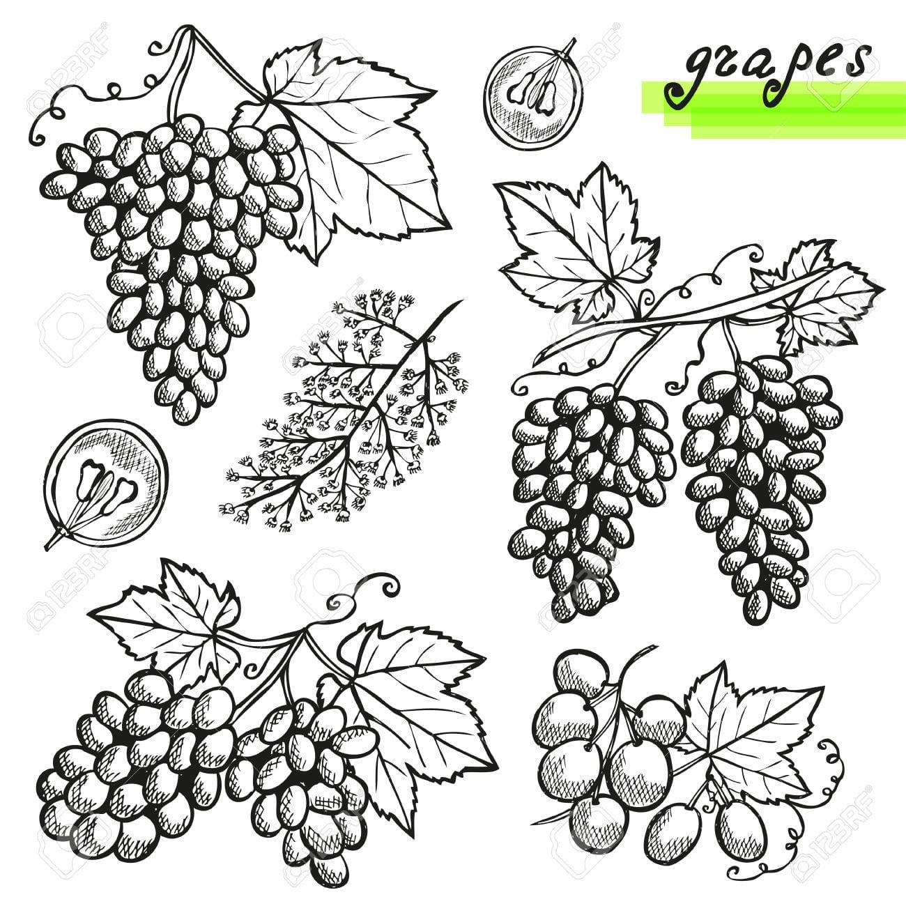 Desenho Uvas Decorativos, Inteiras Ou Cortadas, E Flor De Uva