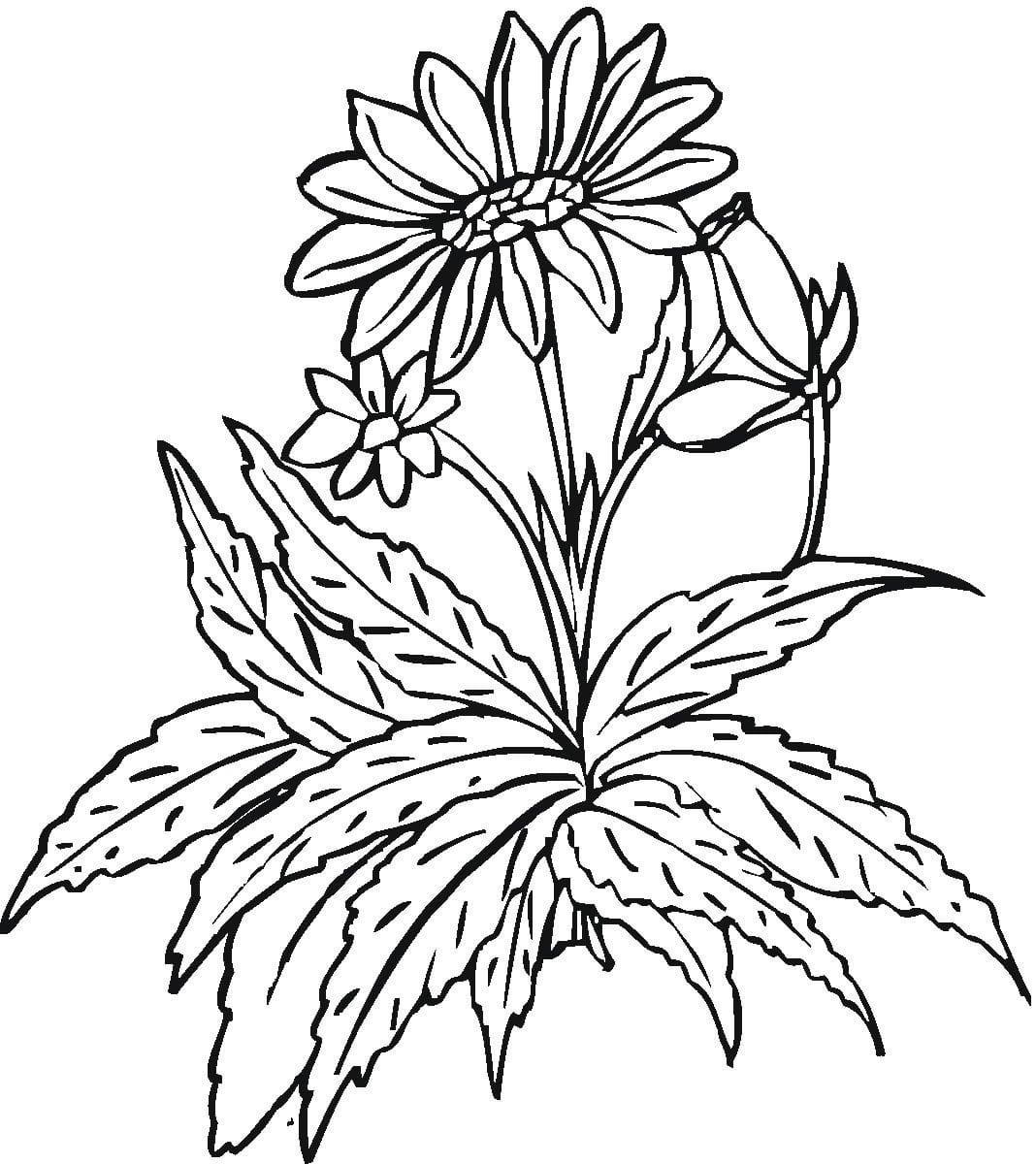 Desenhos De Flores Para Colorir  Imagens De Rosas Para Pintar Online