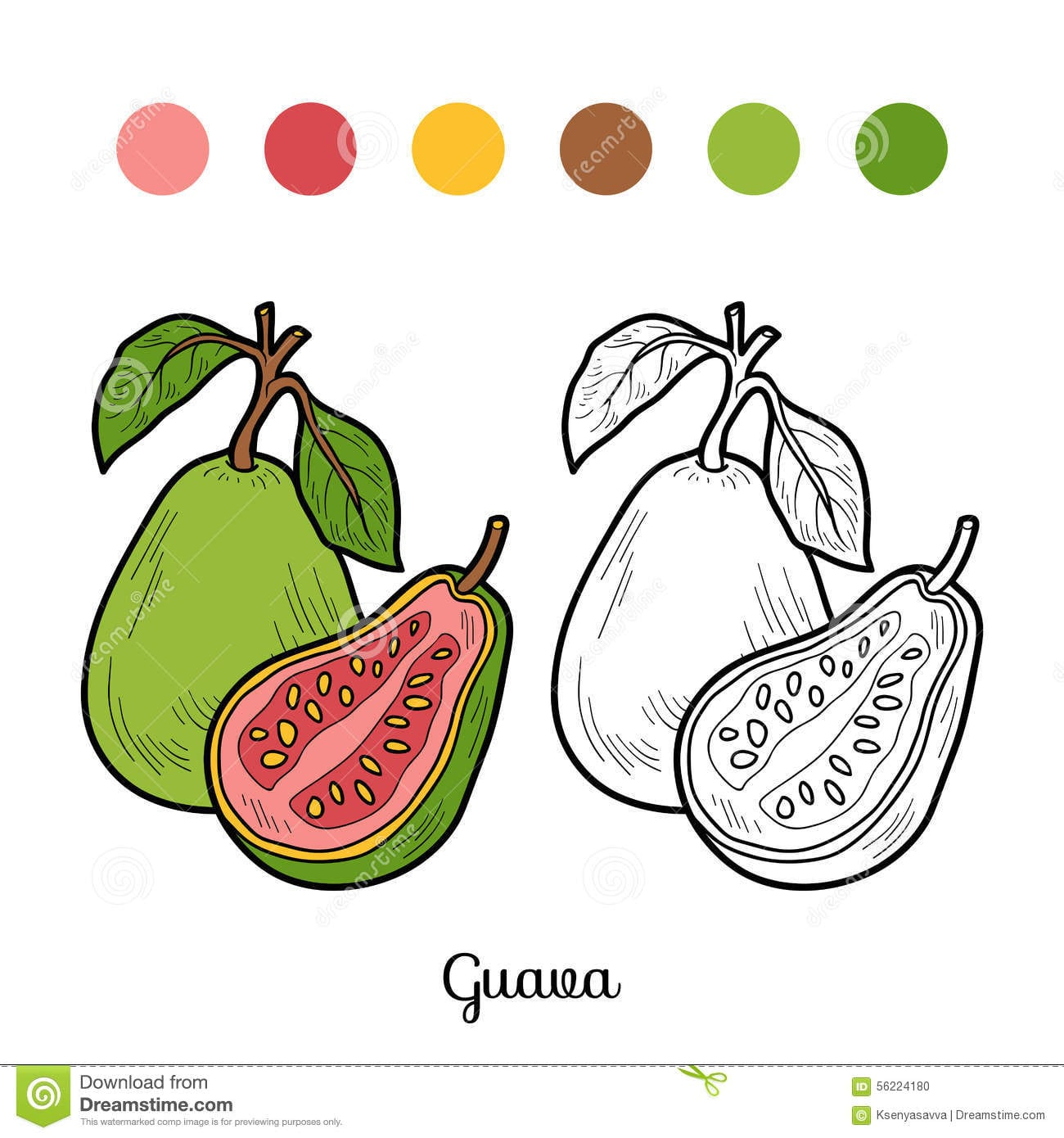 Livro Para Colorir  Frutas E Legumes (goiaba) Ilustração Do Vetor