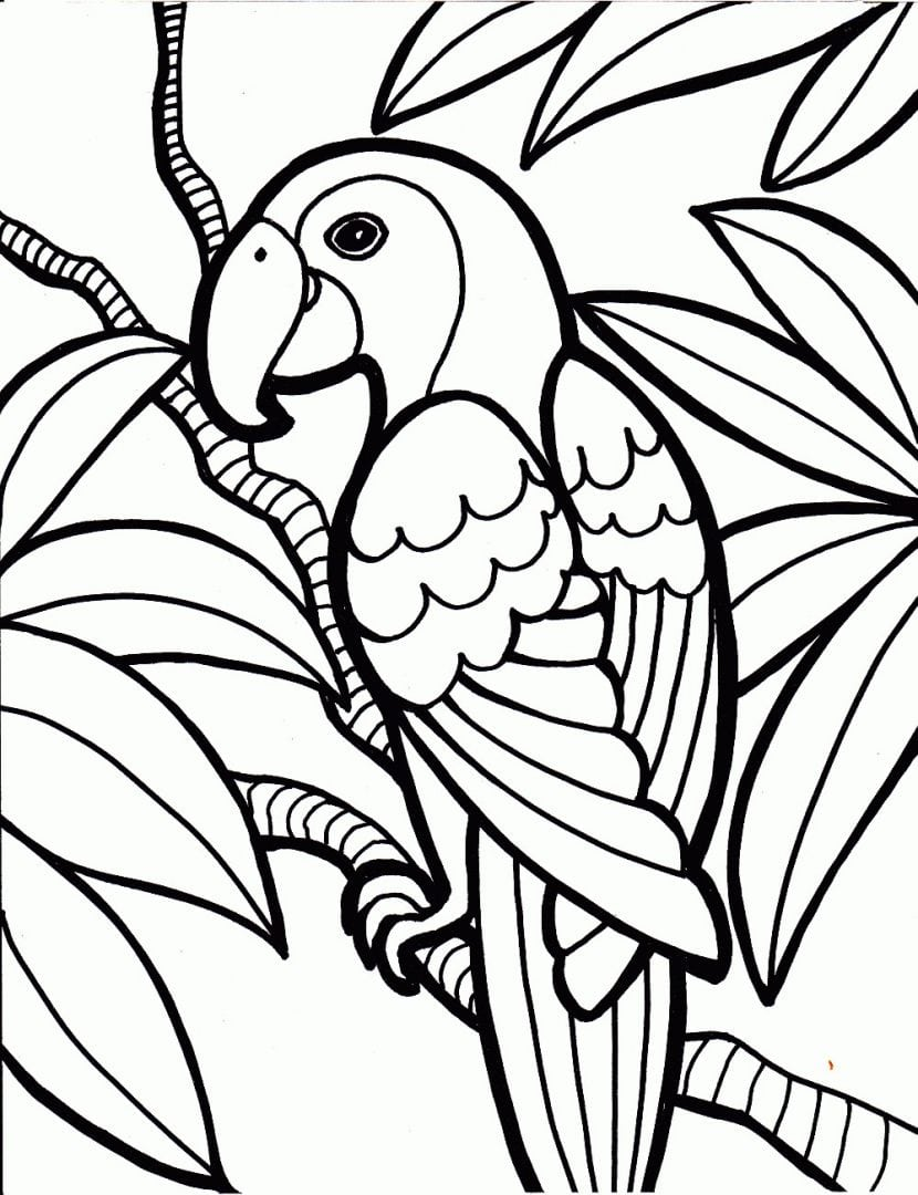 Bird Vector 3 (parrot)  Parrot Drawing With Curl Ornament