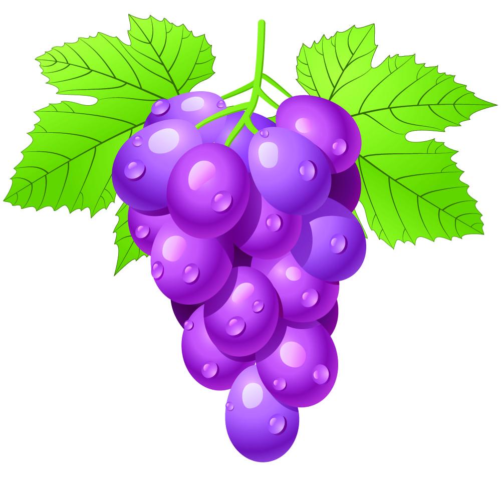 cacho de uva desenho
