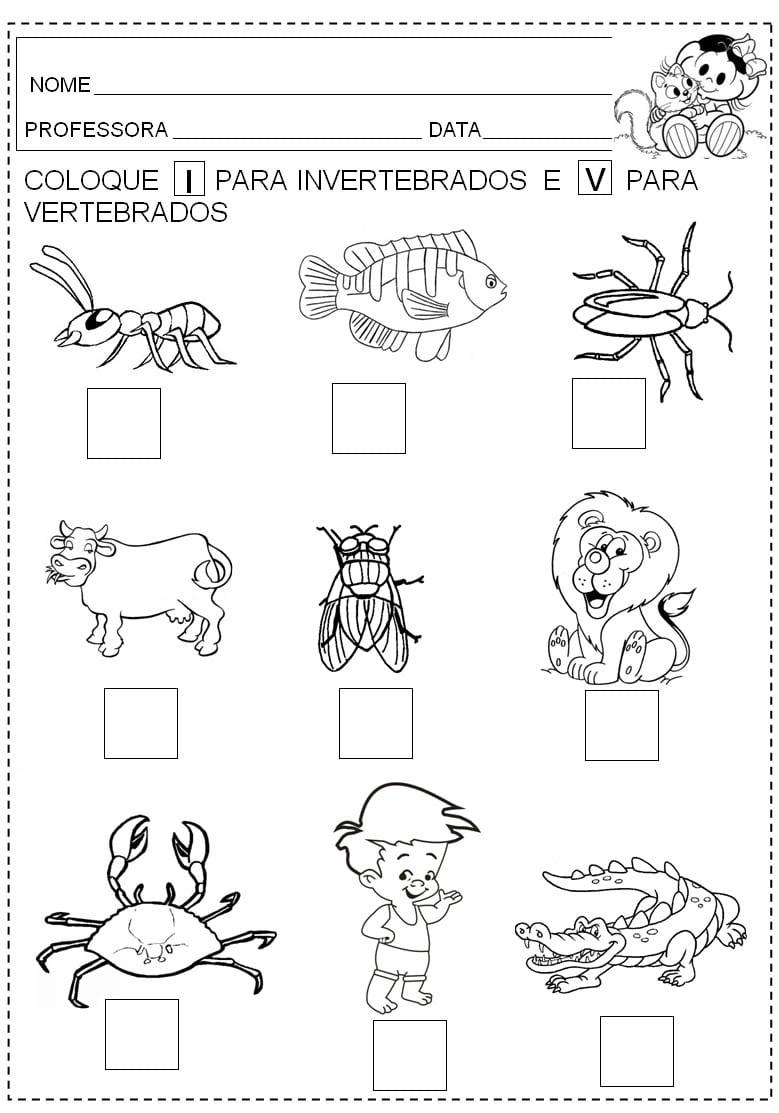 Animais Vertebrados E Invertebrados ExercÍcios Atividades Para