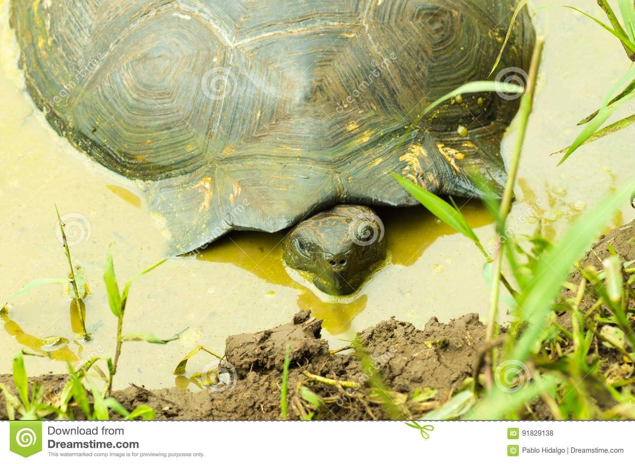 As Tartarugas São Animais Herbívoros Com Uma Dieta Que Compreende