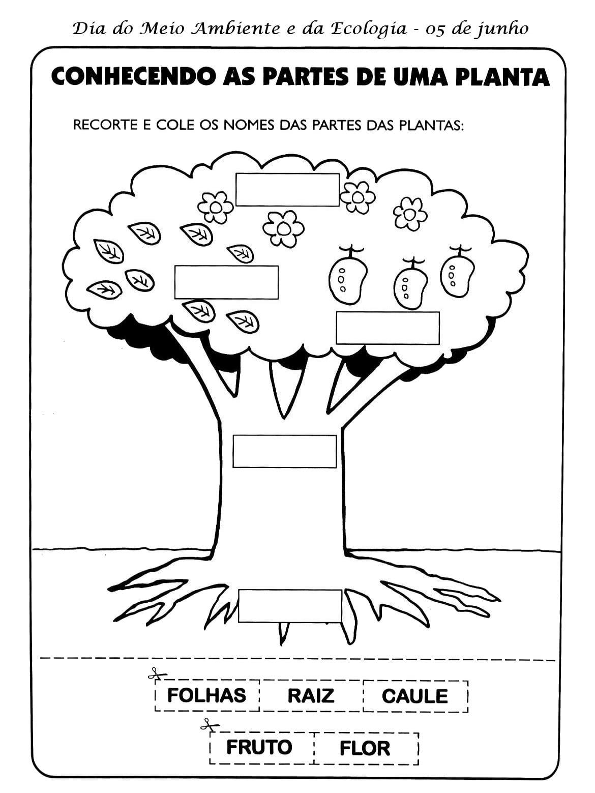 Atividades Meio Ambiente Ecologia árvore Matas Florestas Animais