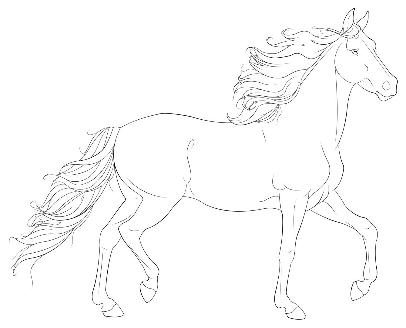Desenhos Cavalos Selvagens