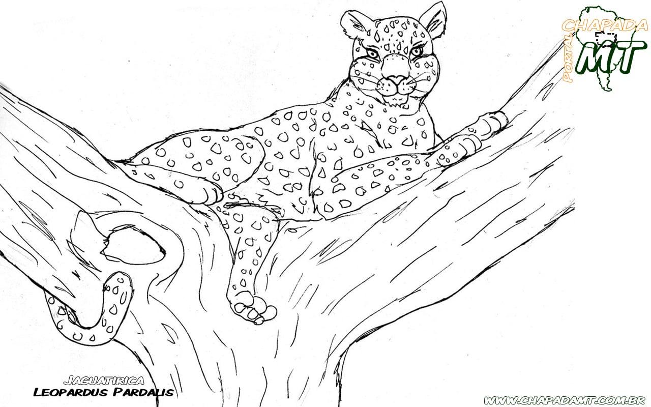 Animais Do Pantanal Para Colorir
