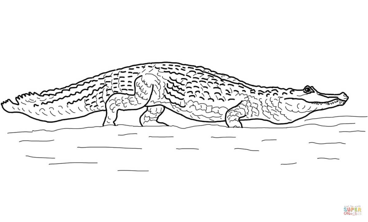Desenho De Jacaré