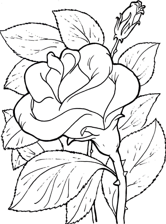 Desenhos Flores Para Imprimir