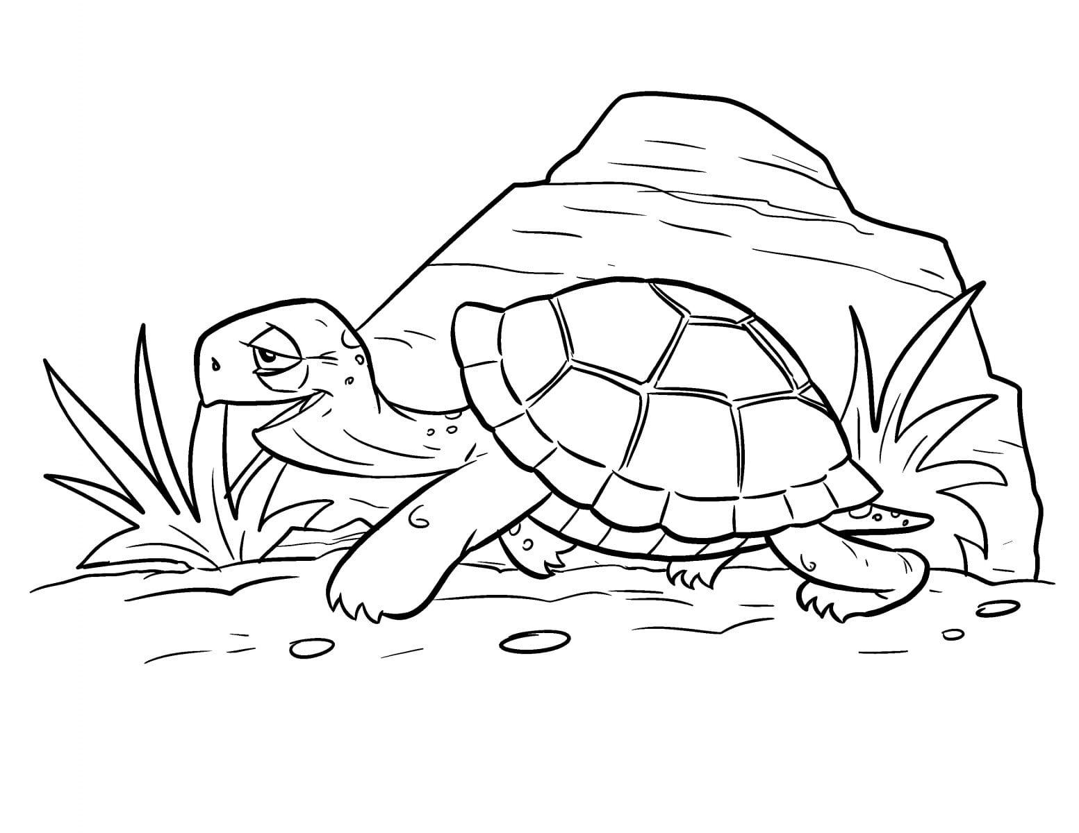 Desenhos De Tartarugas Para Pintar  Desenhoswiki Com