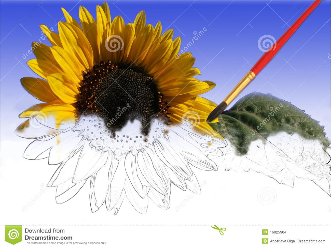 Girassol Pintado Parcialmente Por Uma Pintura Imagens De Stock