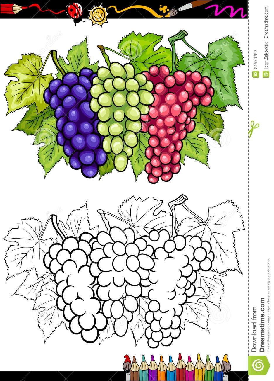 Ilustração Dos Frutos Das Uvas Para O Livro Para Colorir