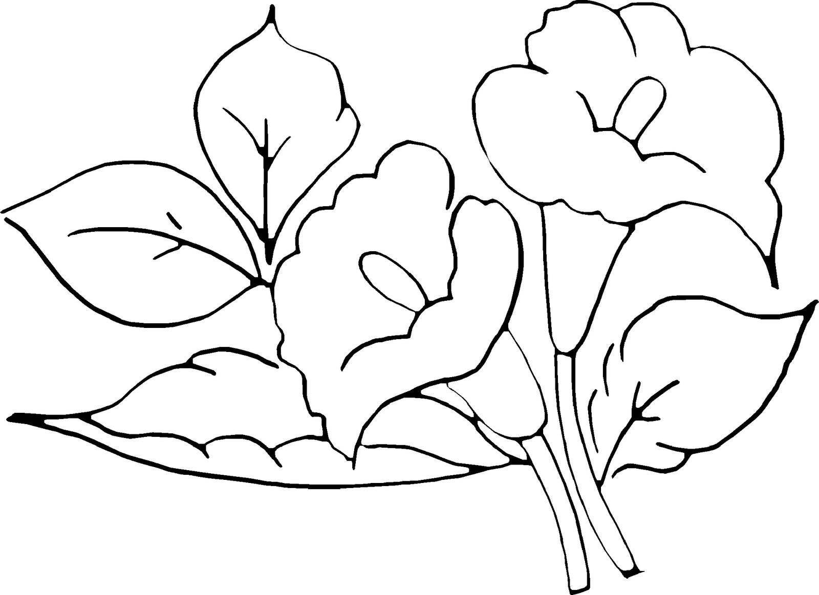 Desenho De Flores Para Pintar