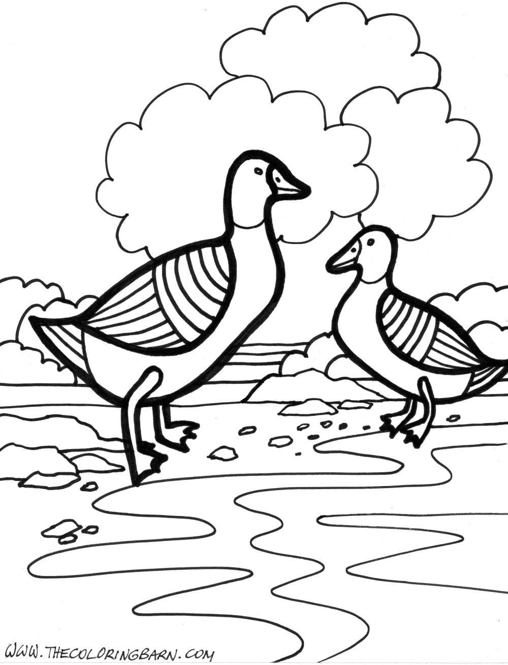 Desenhos Para Colorir De Animais Da Quinta