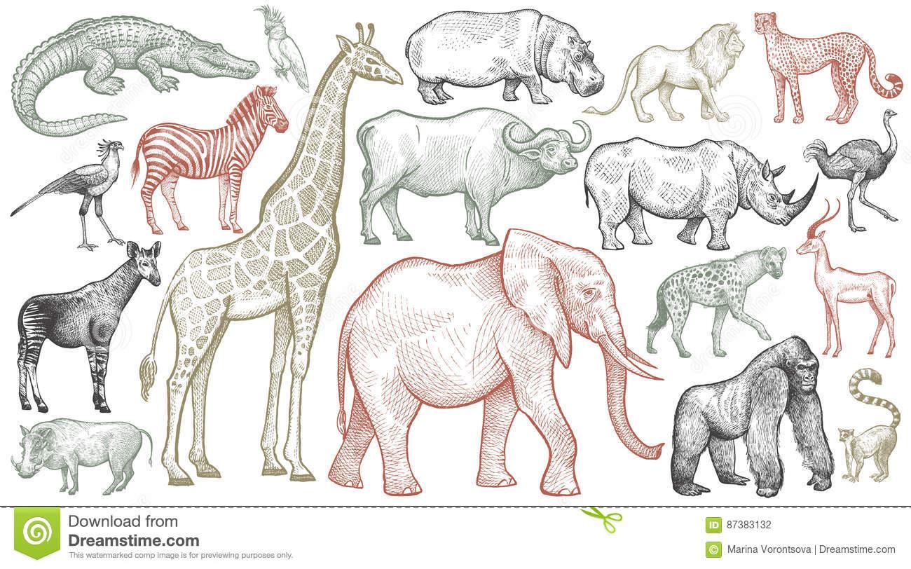 Gravura De Animais Africanos Ilustração Do Vetor