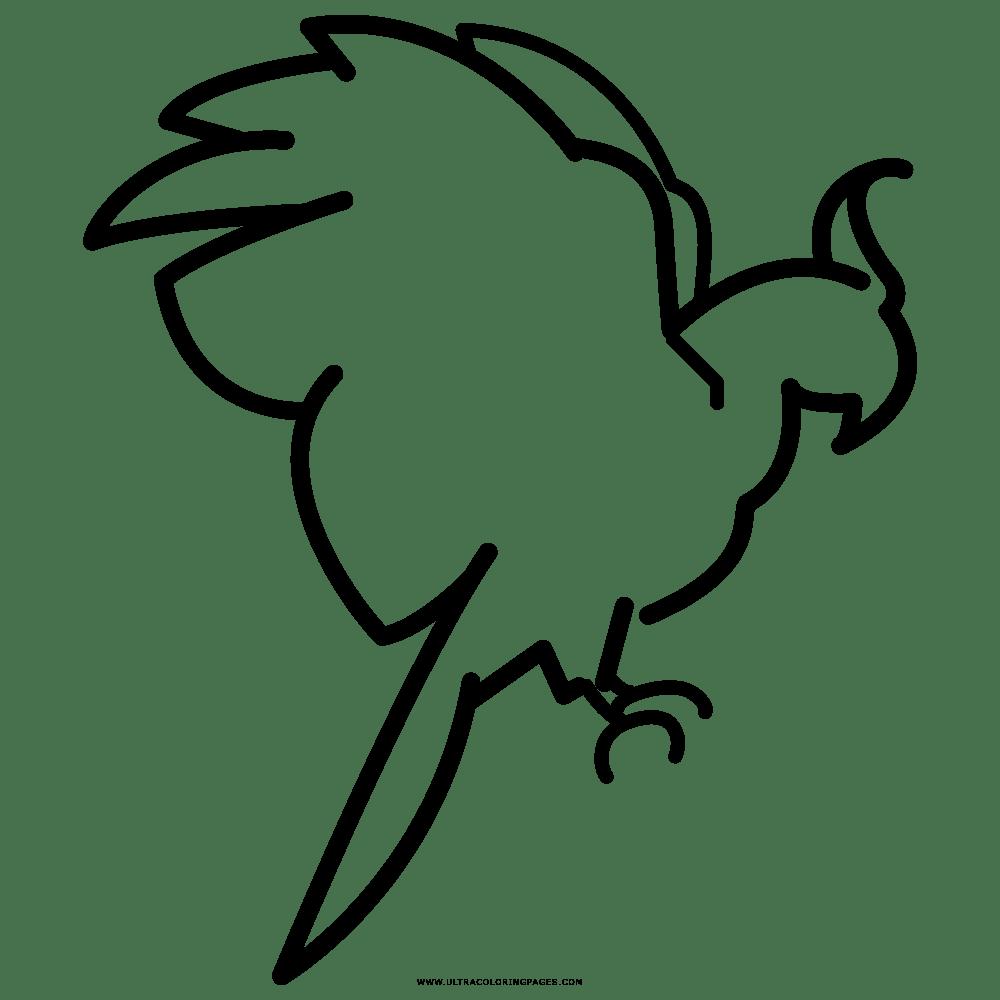 Papagaio Desenho Para Colorir
