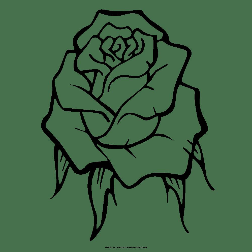 Rosa Desenho Para Colorir