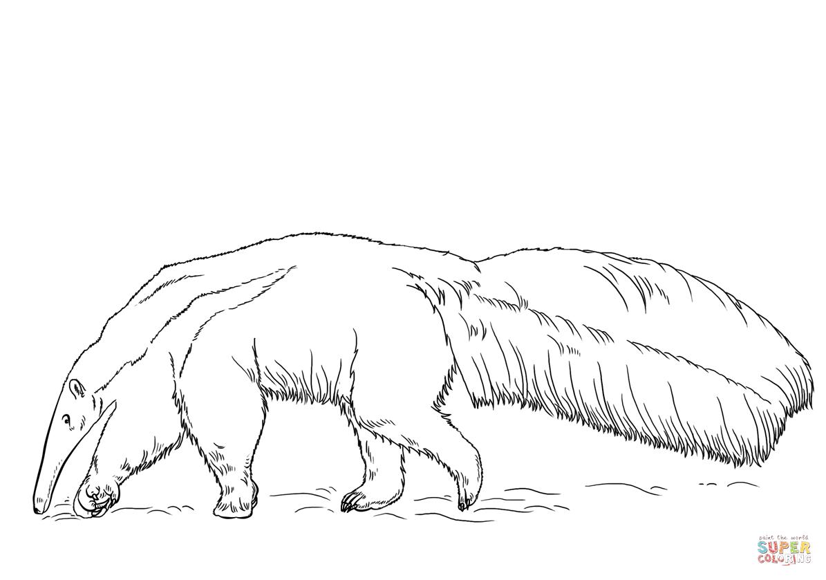 Desenho De Tamanduá