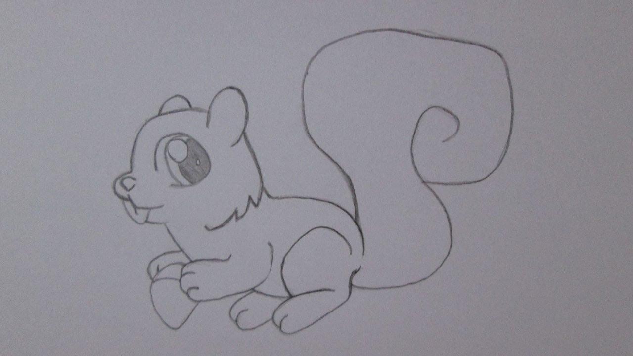 Como Desenhar Um Esquilo