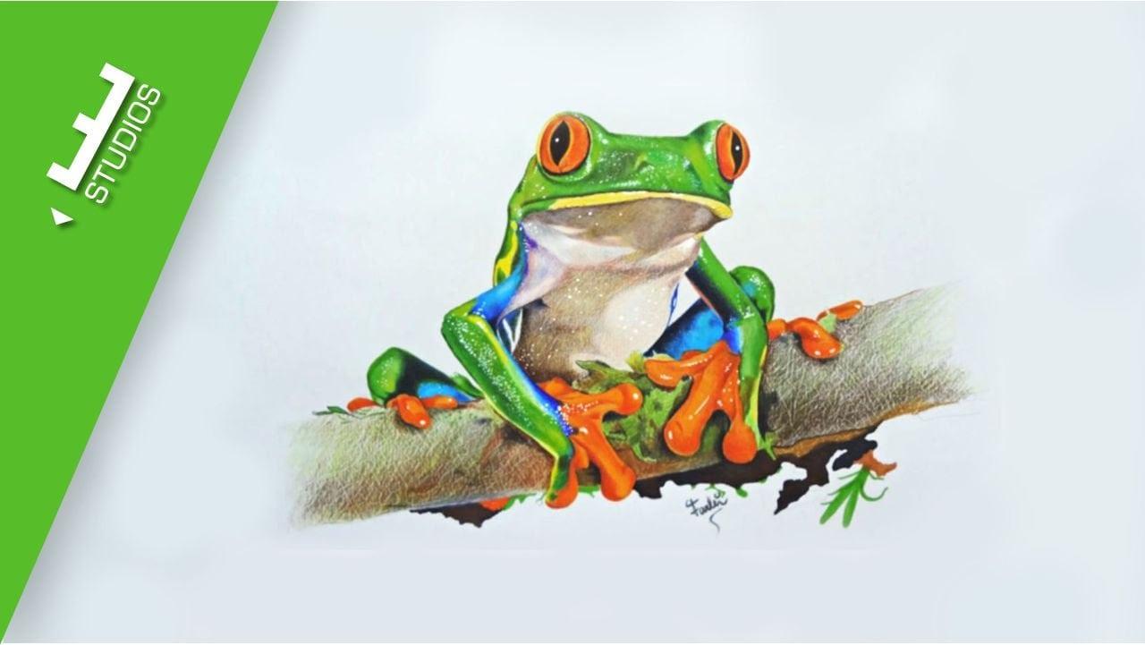 Speed Drawing Frog Desenho Realista De Sapo