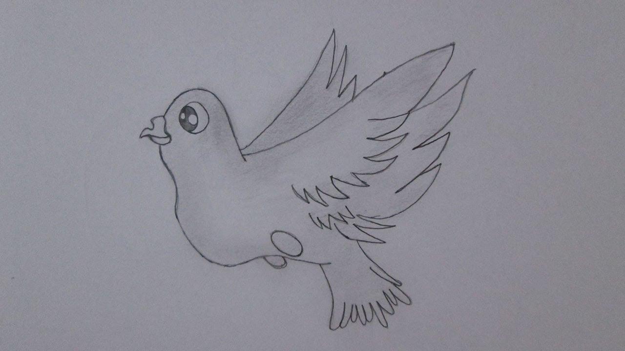 Como Desenhar Um Pombo