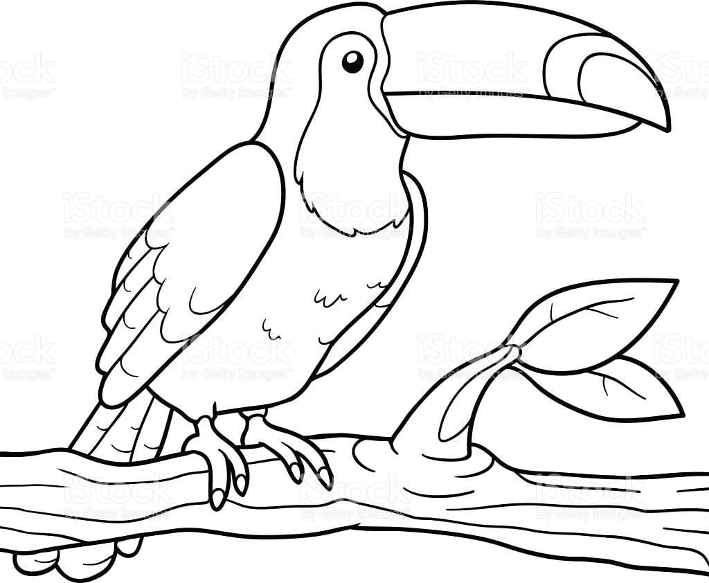 Imagem De Animal Para Colorir
