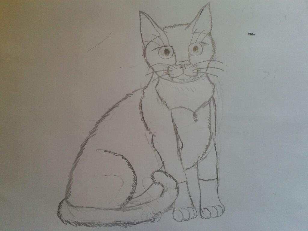 Como Desenhar Um Gato ( Retrato De Minha Gatinha )