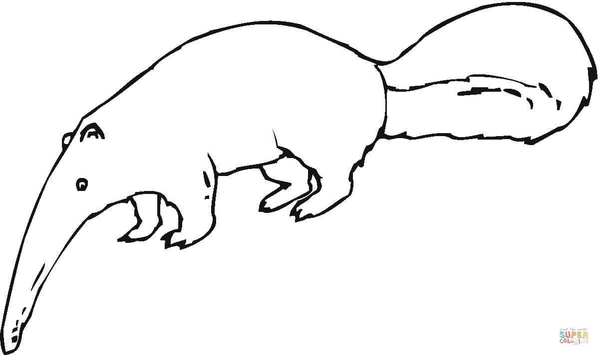 Desenho De Tamanduá Procurando Formigas Para Colorir