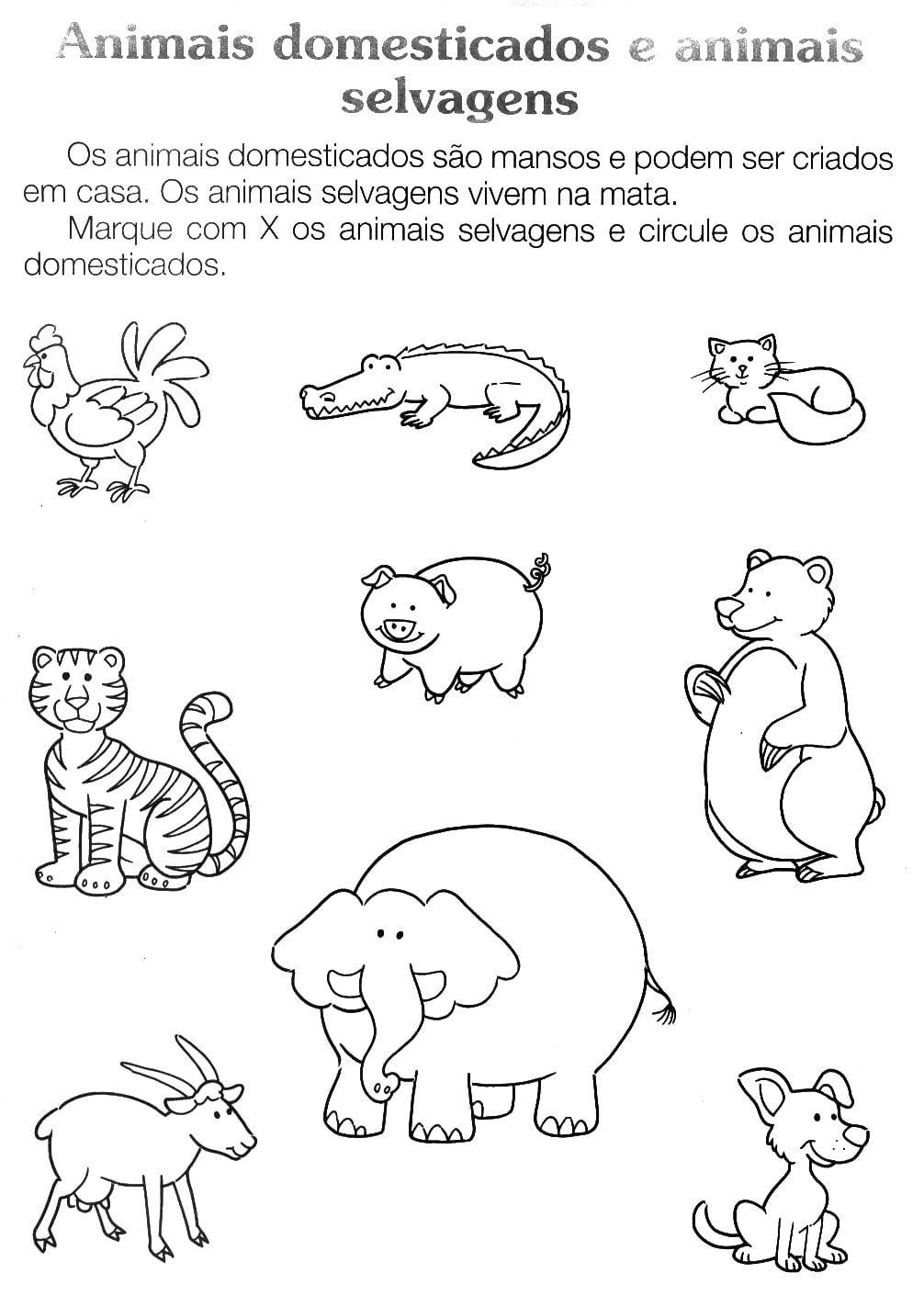 Animais Selvagens Para Imprimir