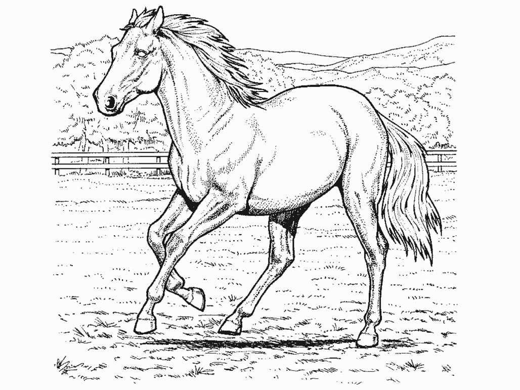 Desenhos Para Colorir Cavalos – Matring Org
