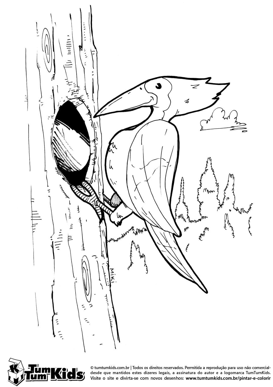 Desenho Do Pica Pau Para Imprimir