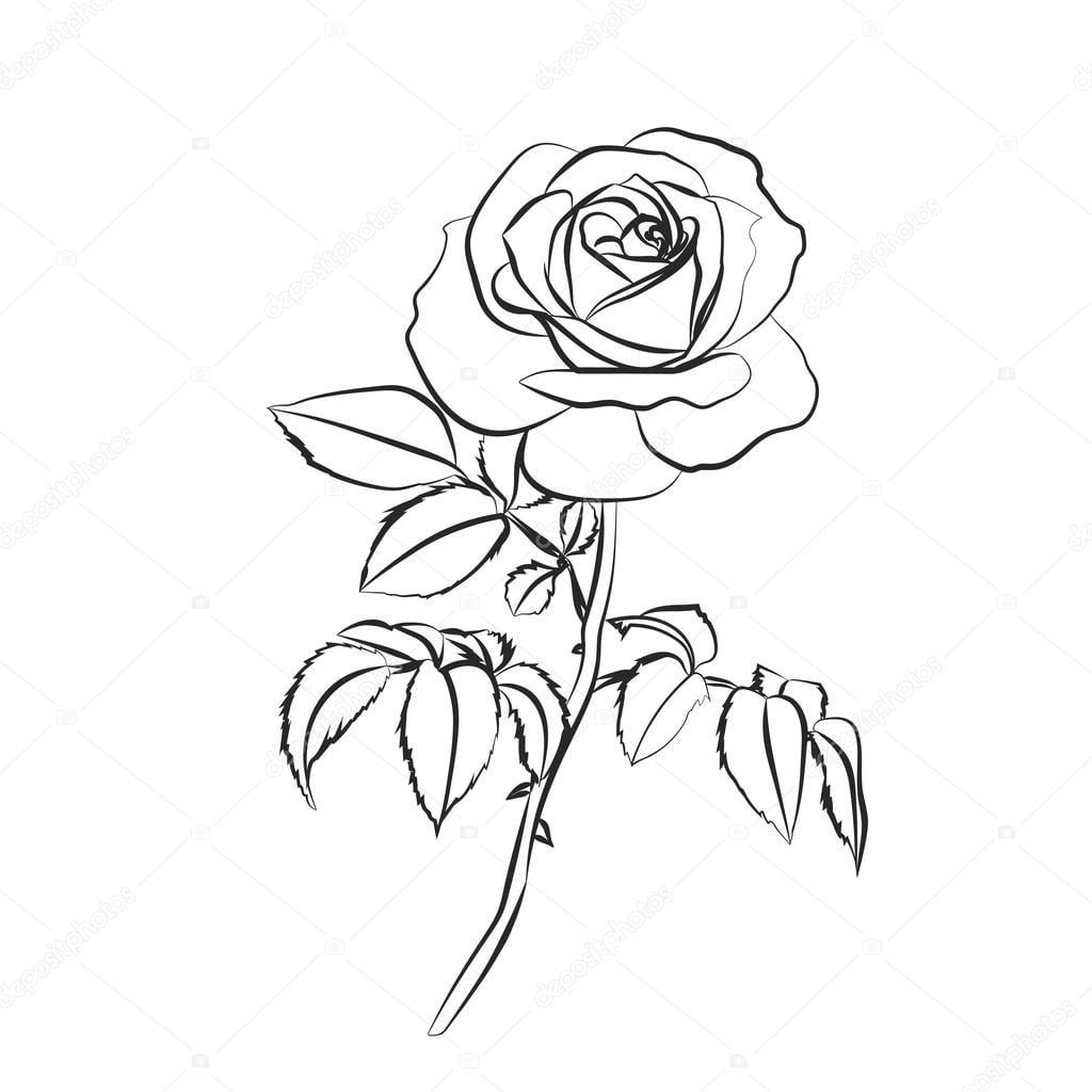 Desenho De Rosa Em Fundo Branco — Vetores De Stock © Likka  100185118