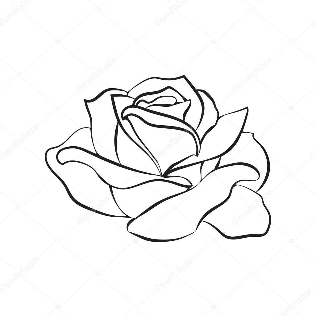 Desenho De Rosa Em Fundo Branco — Vetores De Stock © Likka  109348842