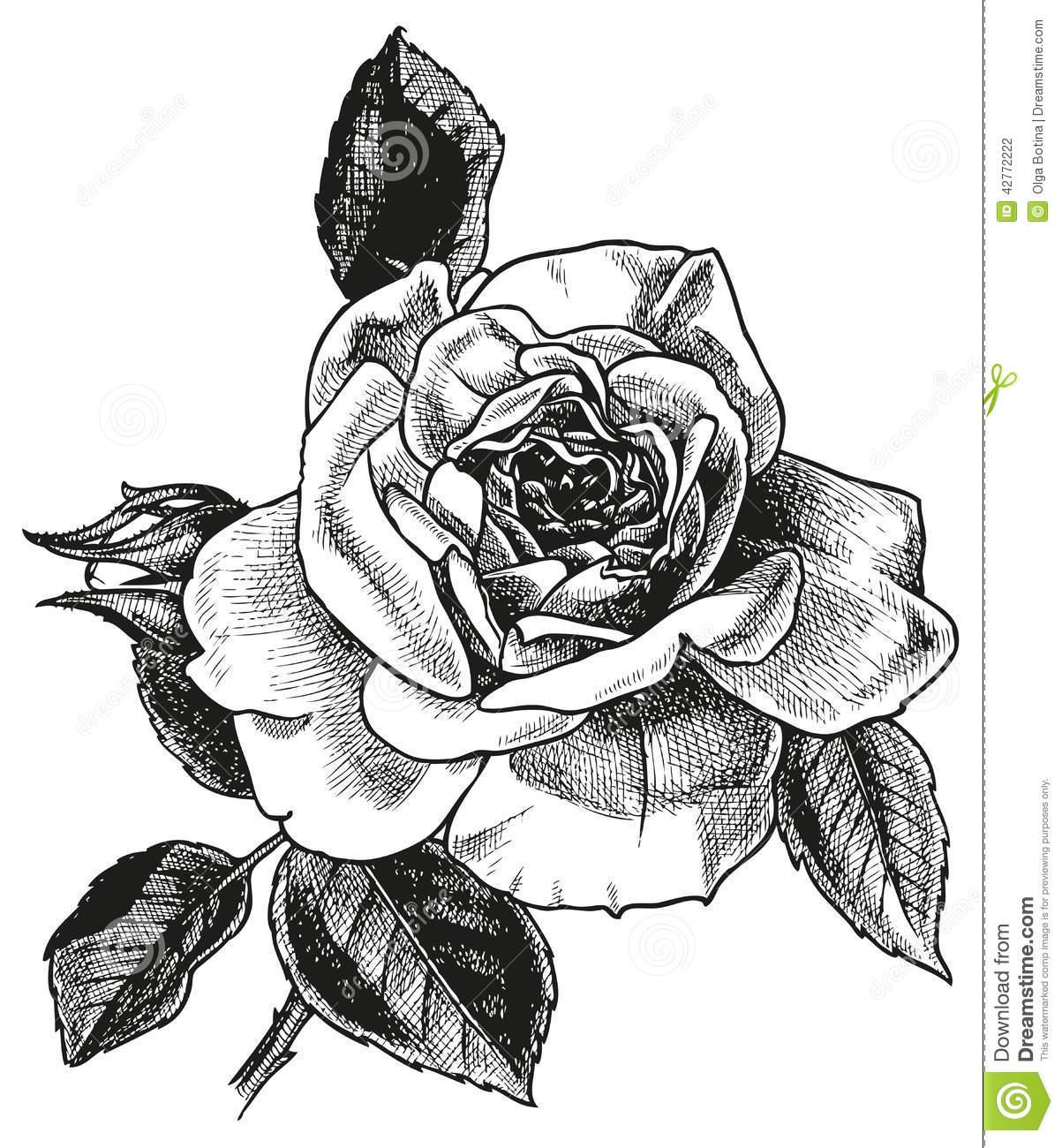 Desenho Da Mão De Rosa Ilustração Do Vetor  Ilustração De Flor