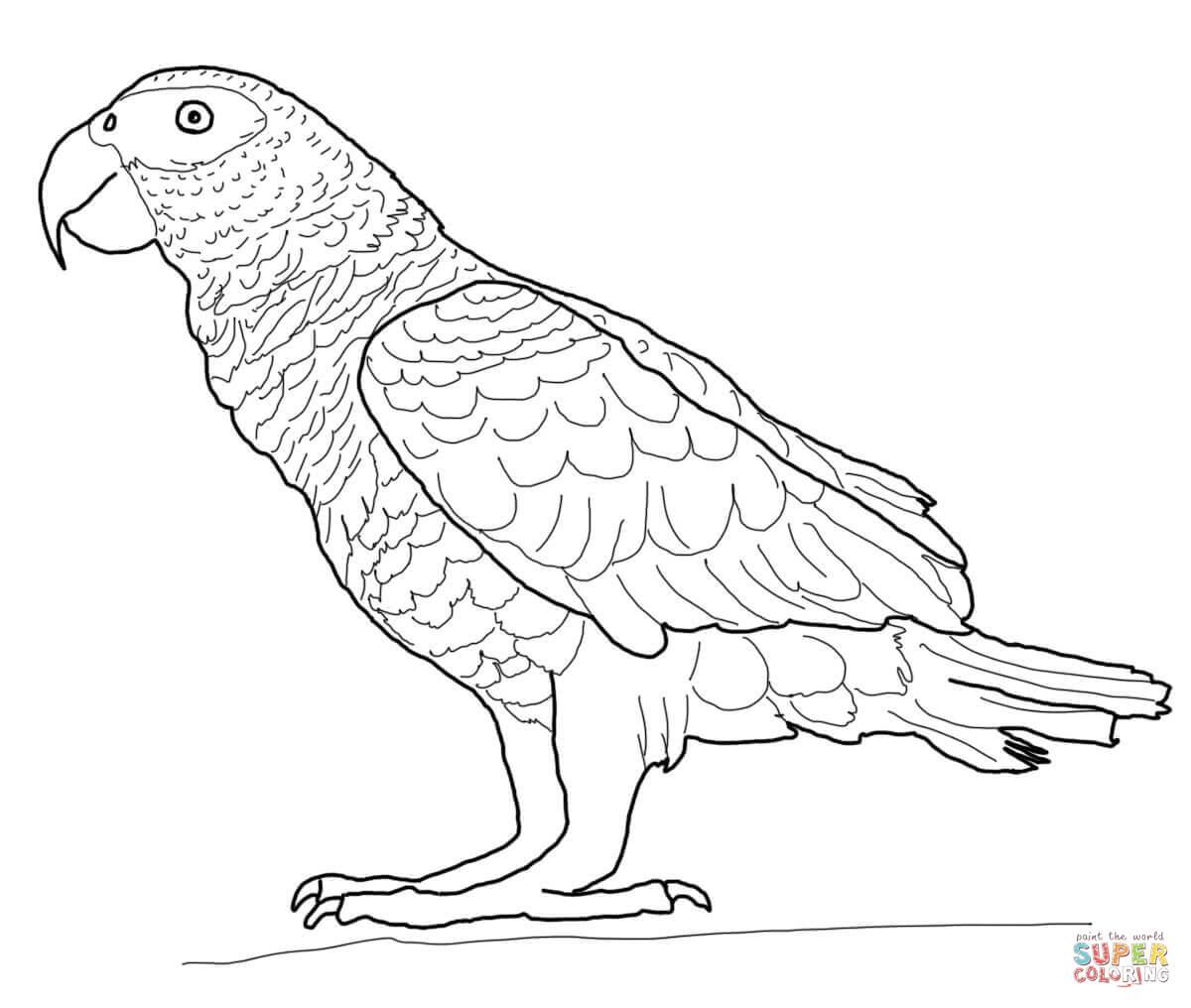 Desenhos De Papagaios Para Colorir – Pampekids Net