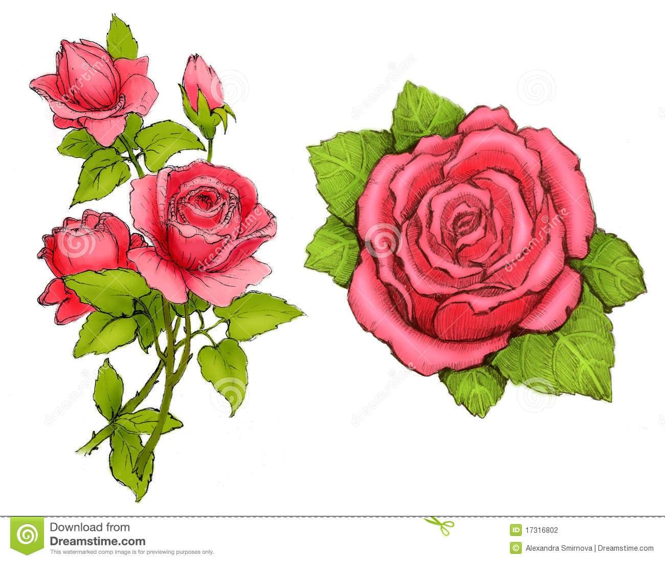 Desenhos De Rosas Cor