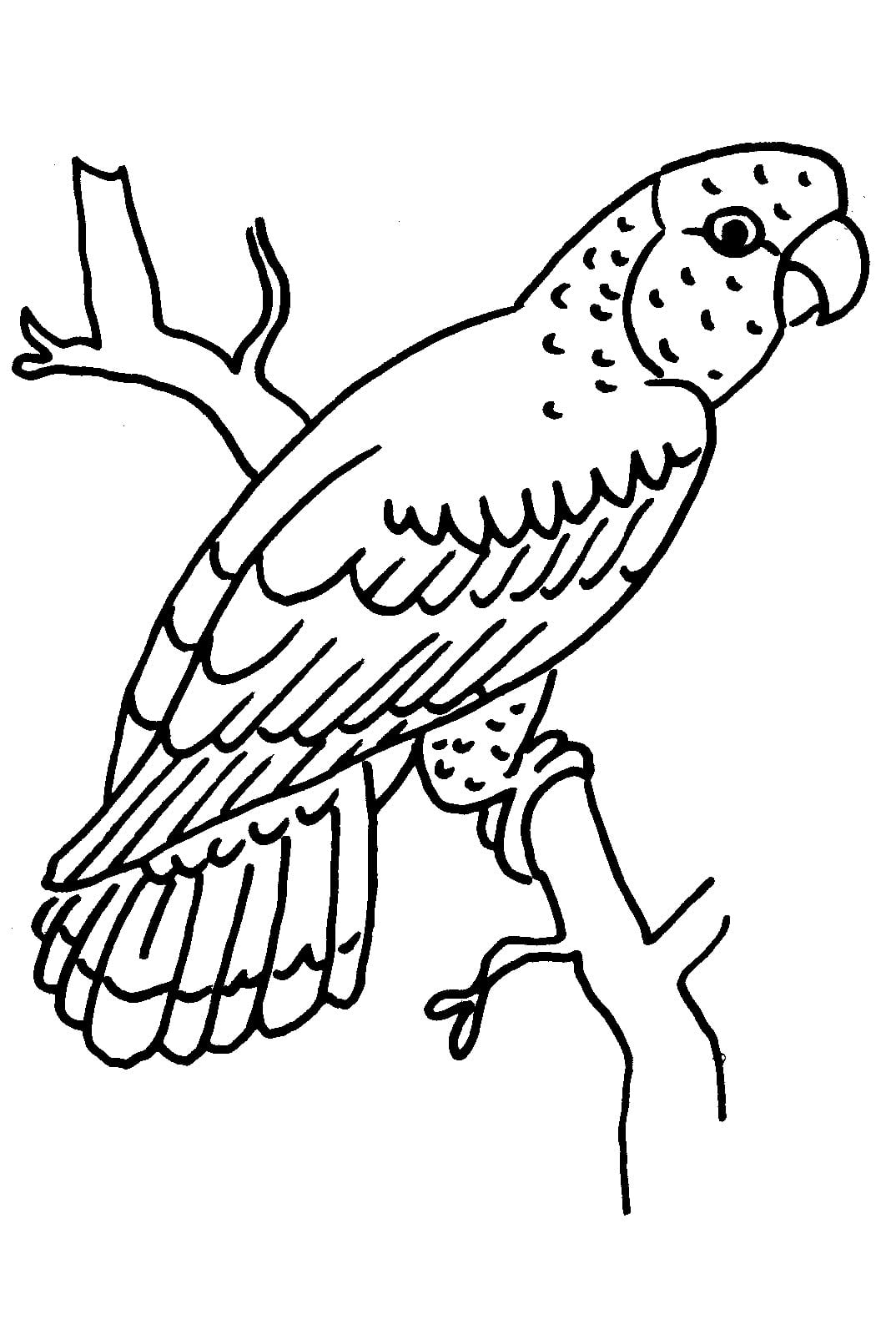 Papagaio Para Colorir – Pampekids Net