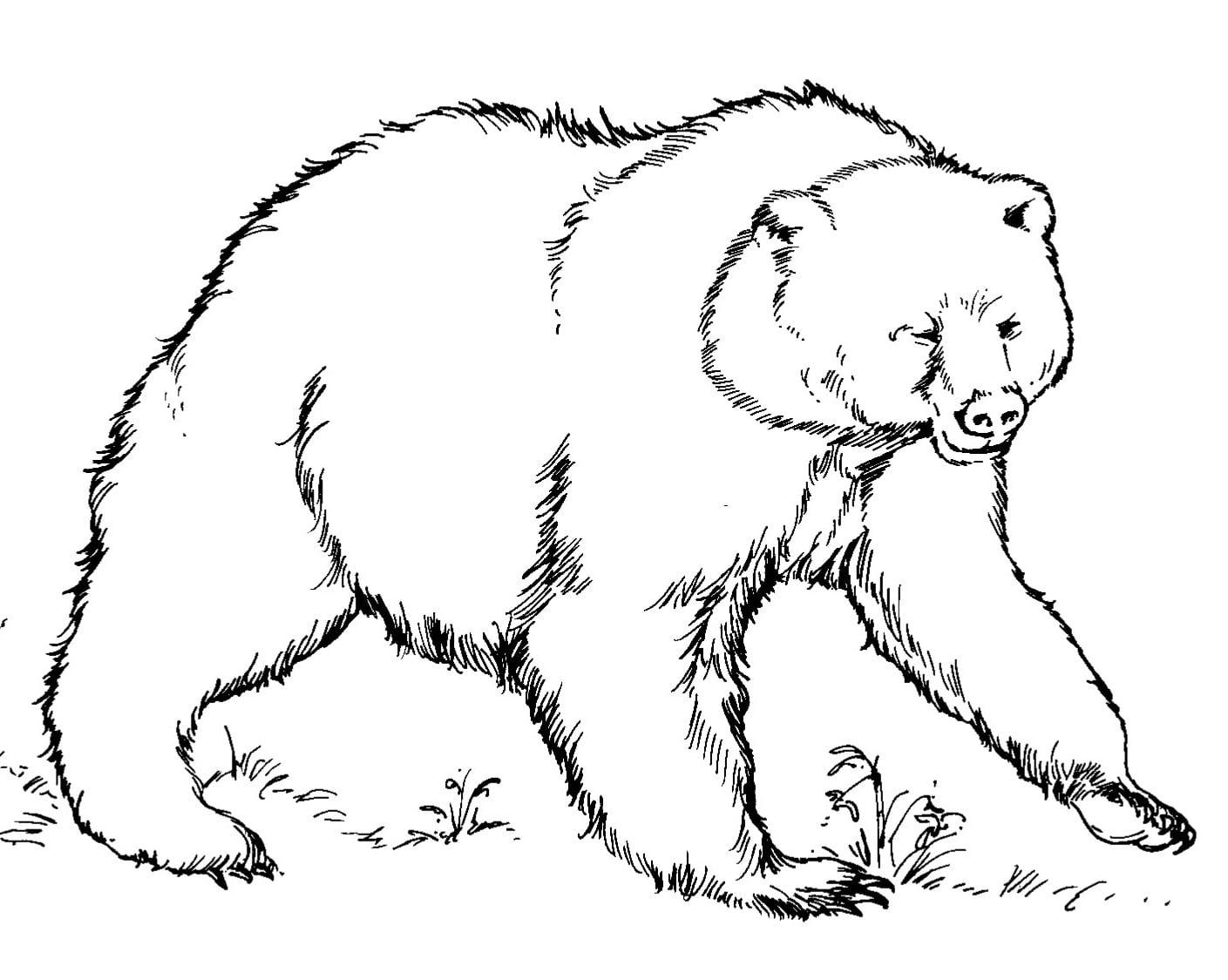 Urso Para Colorir E Pintar 3