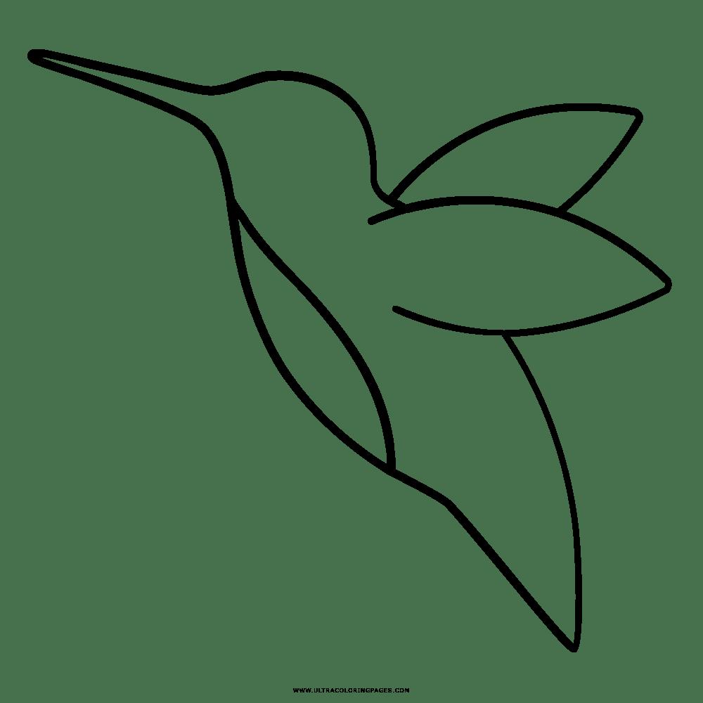 Desenhos De Beija Flor Para Colorir E Imprimir