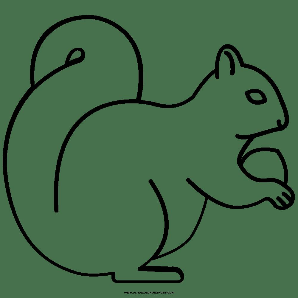 Esquilo Desenho Para Colorir