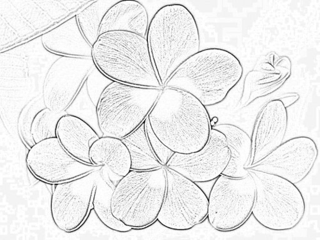 Flores Para Pintar En Tela