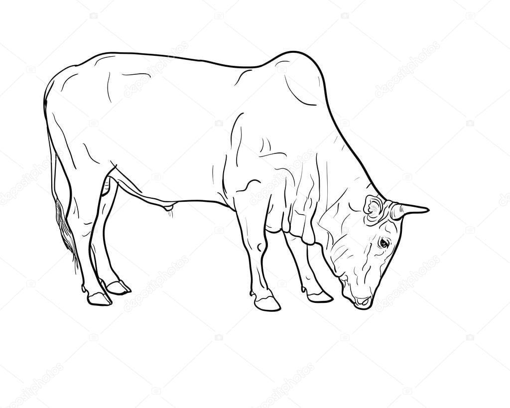 Desenho De Boi — Vetores De Stock © Hadkhanong1979  84050632