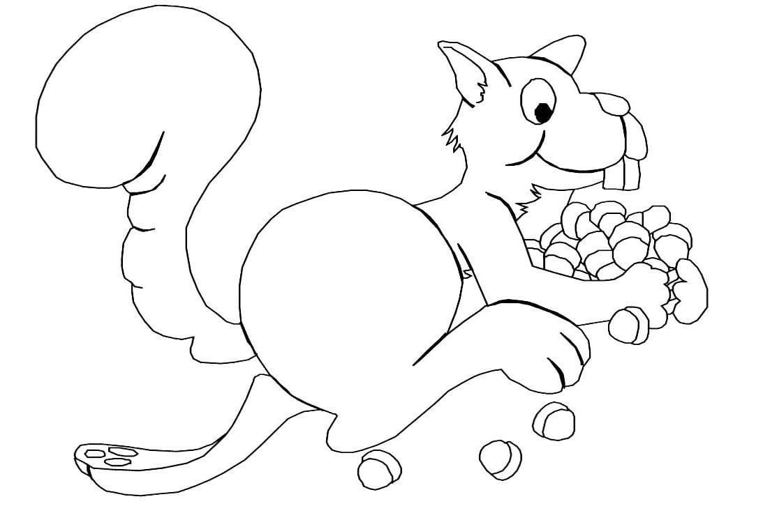 Desenho De Esquilo Para Colorir