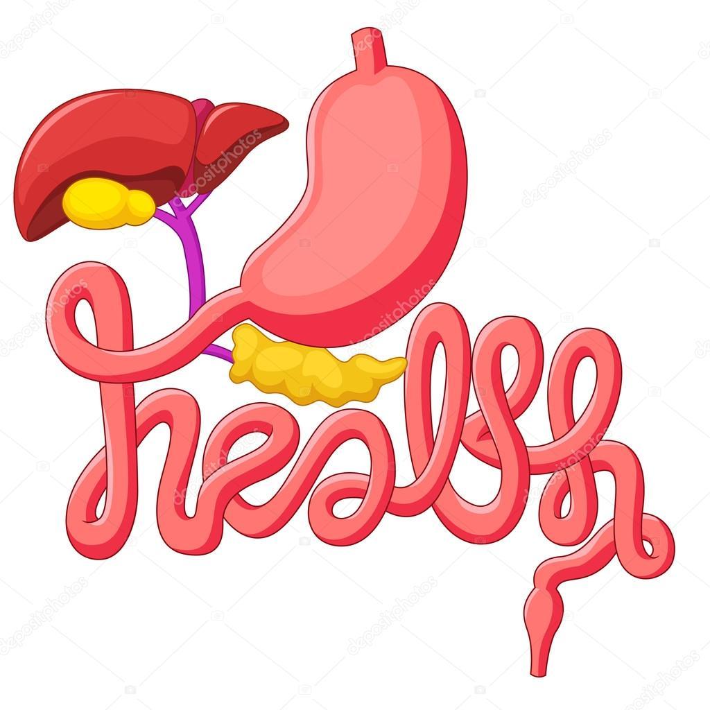 Desenhos Animados Sistema Digestivo Humano De Símbolo De Campanha
