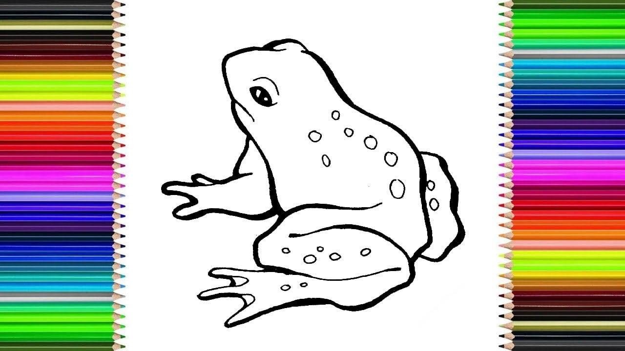 Como Desenhar Um Sapo FÁcil     How To Draw Frog (easy)