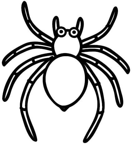 Desenhos De Aranhas Para Colorir