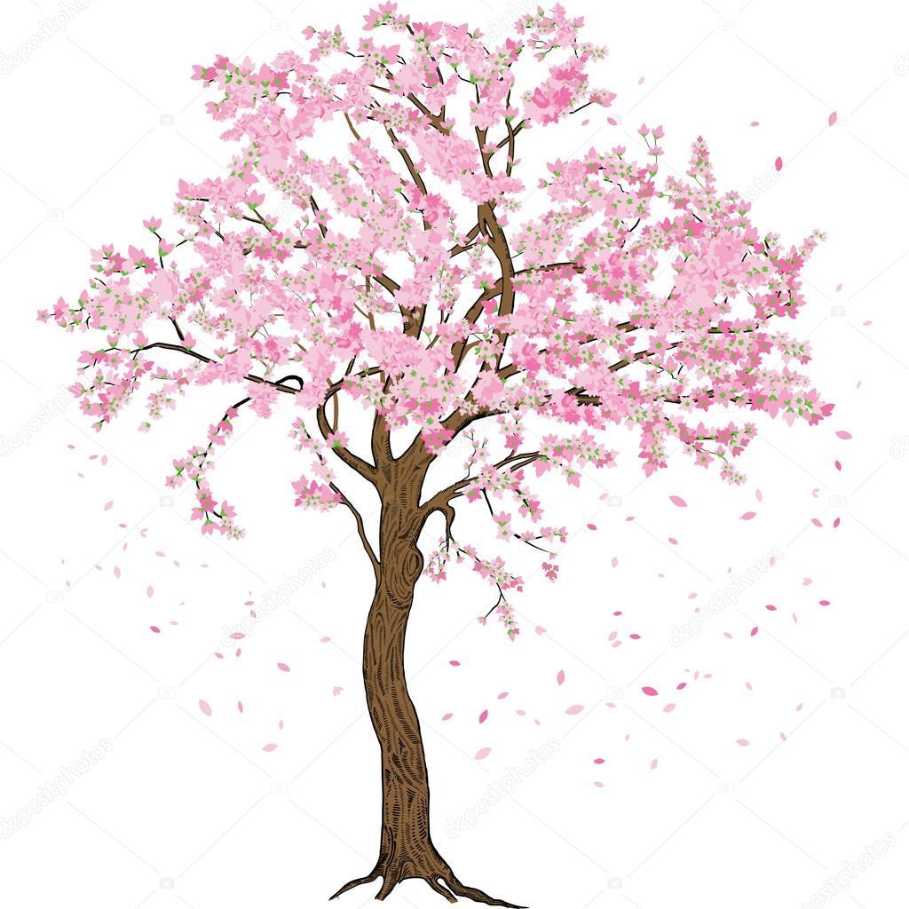 Isolado De Sakura Flor De Primavera Florescendo árvore Com